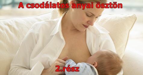 A csodálatos anyai ösztön 2. rész
